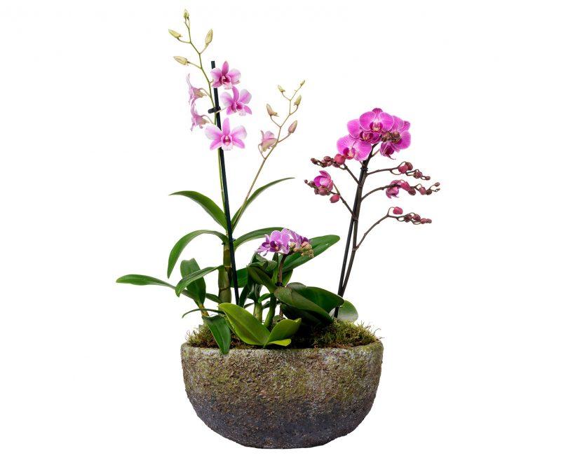 Planta Nº 12 Orquídeas mix en maceta ovalada - Margarita se llama mi amor