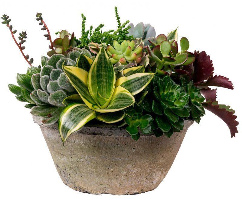 Planta Nº 22 Suculenta mix en maceta de cerámica - Margarita se llama mi amor