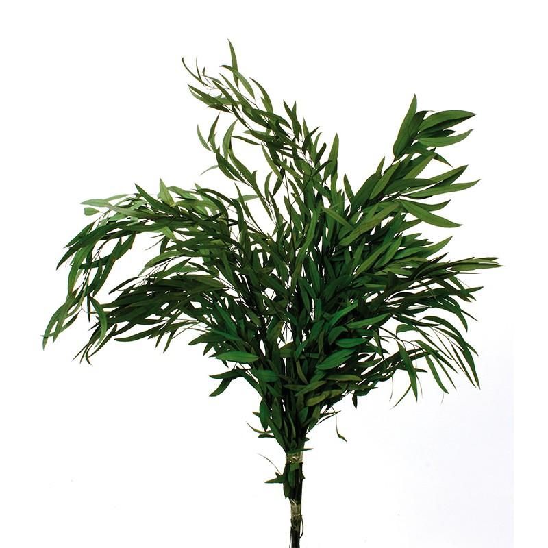 eucaliptos-nicoli-press